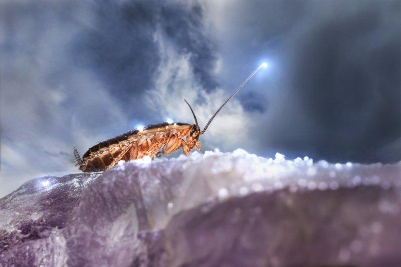 Жуткий бизнес: новосибирцы зарабатывают на тараканах