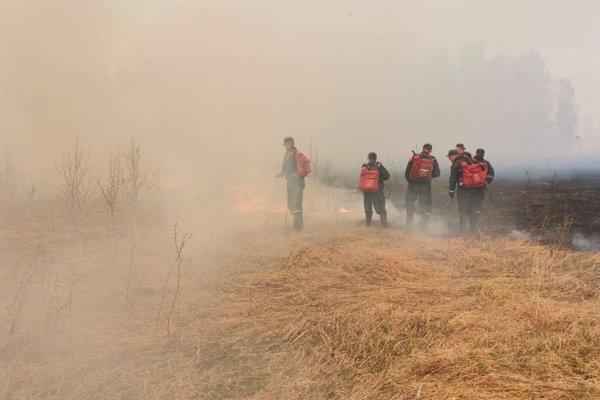 Бороться с предрассудками сжигающих старую траву фермеров призвал губернатор Травников