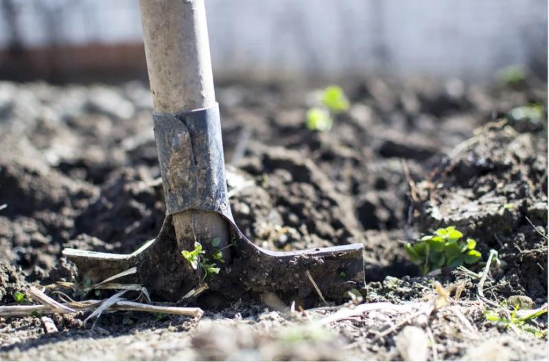 Не трогайте землю: урожай погибнет, если посадить в эти 4 дня до конца мая