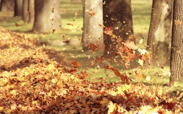 Новосибирцев унесет ветром в четверг
