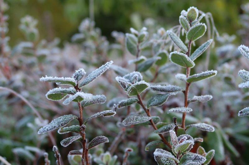 Снег и заморозки до -4 градусов уже завтра прогнозируют в Новосибирской области