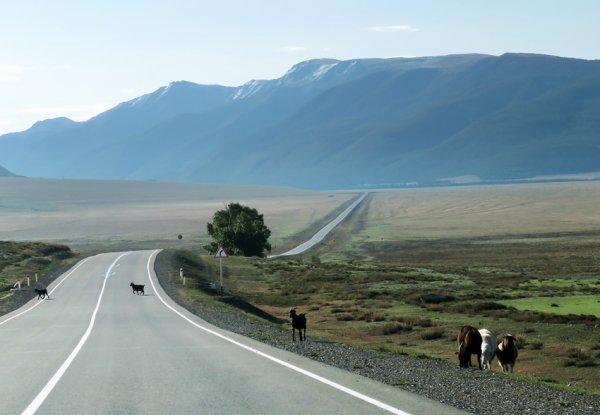 Не всех новосибирцев пустят отдохнуть на Алтай