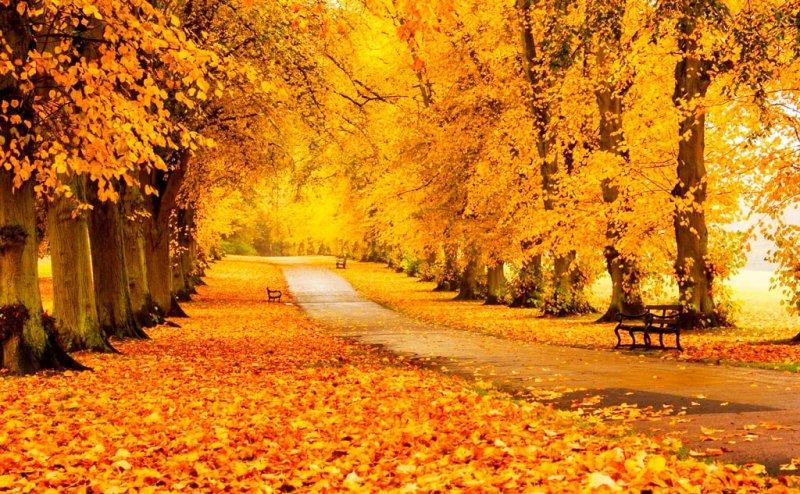 Какие болезни обостряются осенью и что с этим делать - простые советы для здоровья