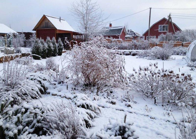 Зимний календарь огородника и садовода: какие работы необходимо сделать с холодное время года