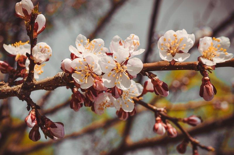 Назван способ продлить майские праздники: как получить дополнительные выходные?
