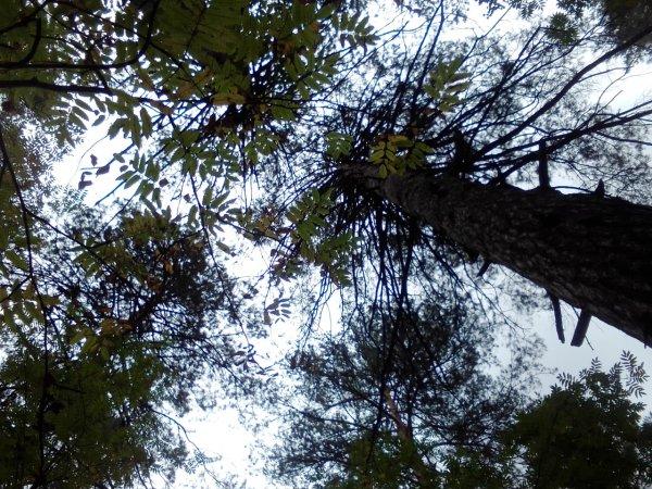 Вставная челюсть, нет пальца: следователи ищут родных найденной в лесу мертвой женщины