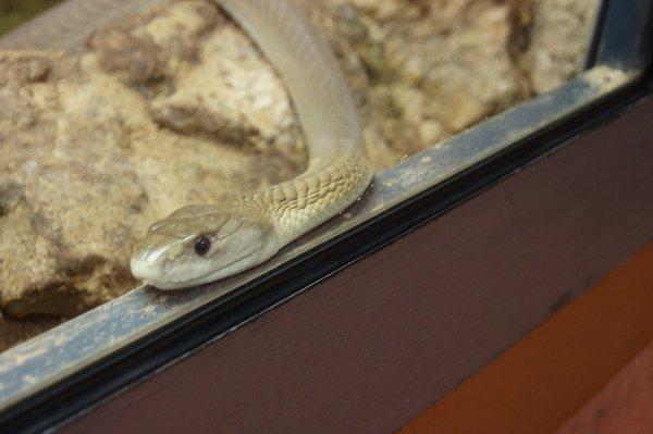 Из-за укусившей ребенка змеи закрыли новосибирский «Форт Боярд»