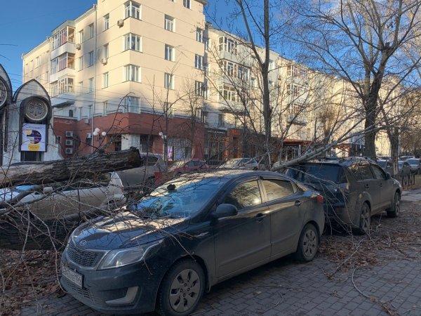 Унесённые ветром: хроника новосибирского шторма