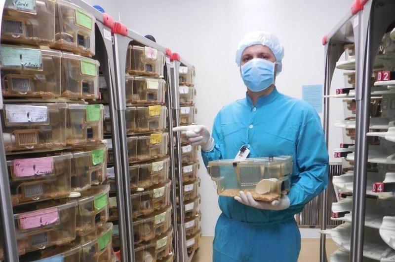 Новосибирские ученые снимают реалити-шоу с беременными «коронавирусными» мышами