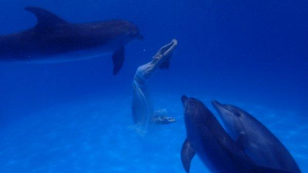 Мокрая магия: где получают профессию тренеры дельфинов и моржей?
