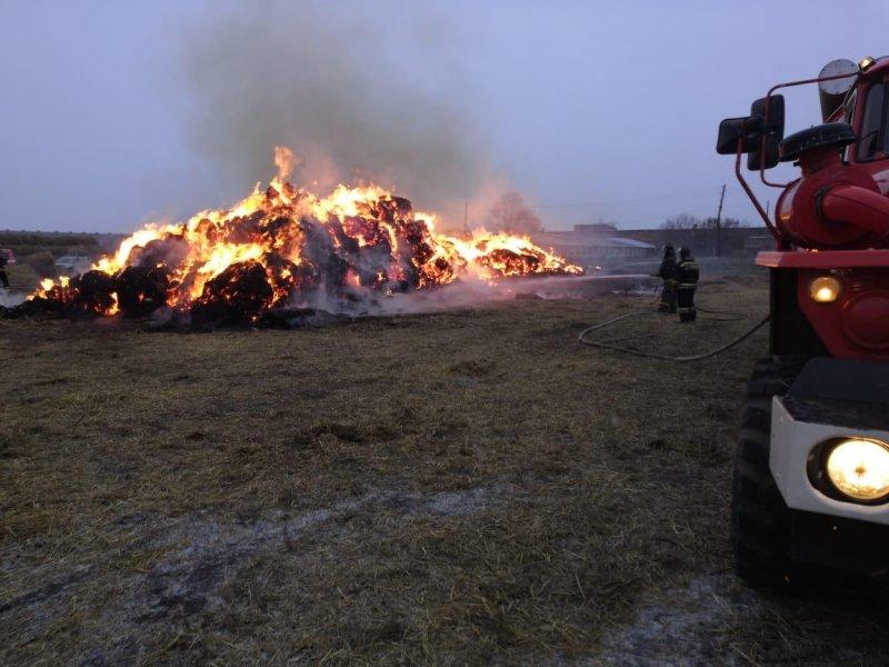 Огонь уничтожил 300 квадратных метров сена и оставил коров голодными