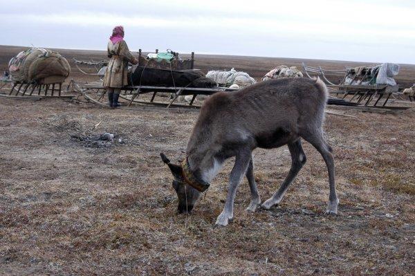 Сибирь ожидает климатическая катастрофа
