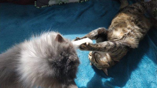Беззубая кошка по имени Кулич нашла дом на Пасху
