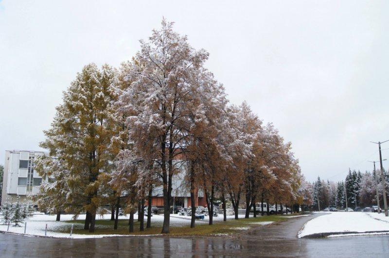 Первый снег накроет Новосибирск в середине недели