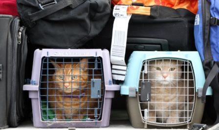 Новые правила перевозки животных на самолетах Аэрофлота