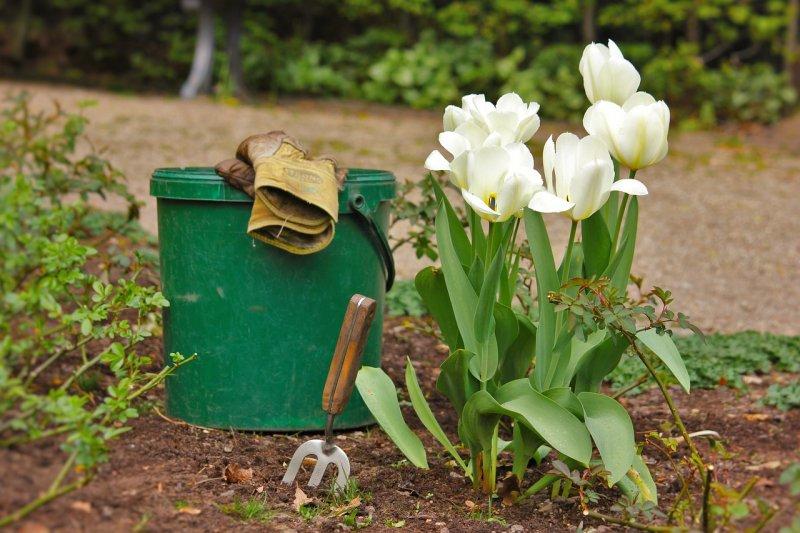 Правила посадки тюльпанов осенью: на что обращать внимание