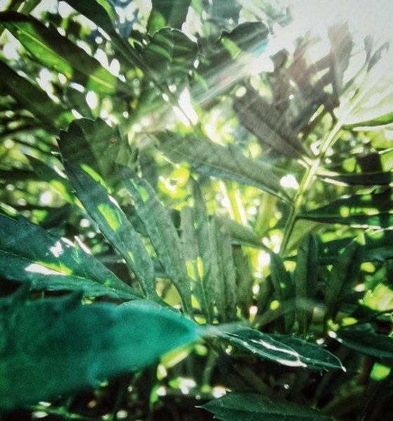 «Наслаждайтесь солнышком»: новосибирцев ждет аномальная жара в августе