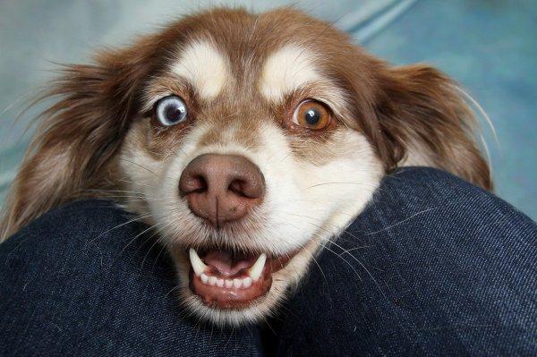 Прокуратура: мэрия должна заставить собак Новосибирска гулять по закону