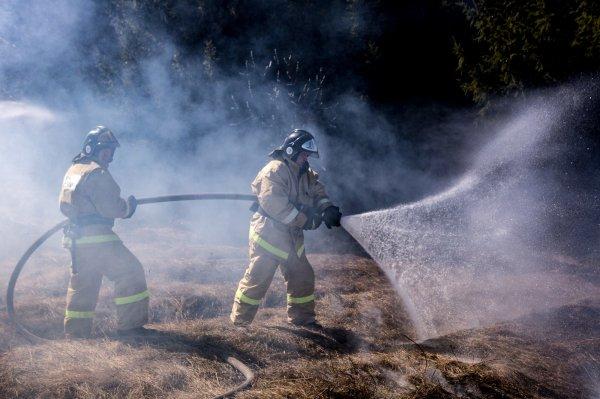 «Сгорели на 11 миллионов»: засуха привела к ЧС в 11 районах Новосибирской области