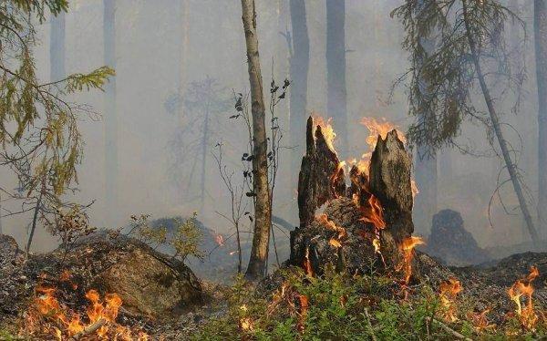 Новосибирская область выберет лучшего лесного пожарного