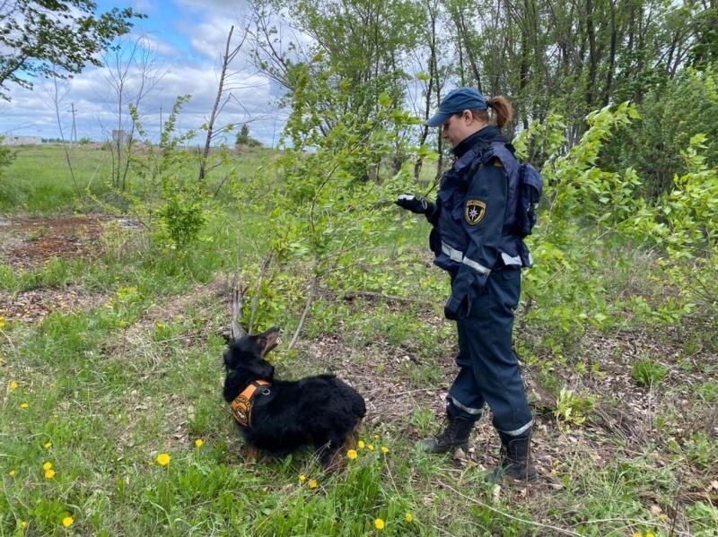В лесах Новосибирской области массово исчезают грибники