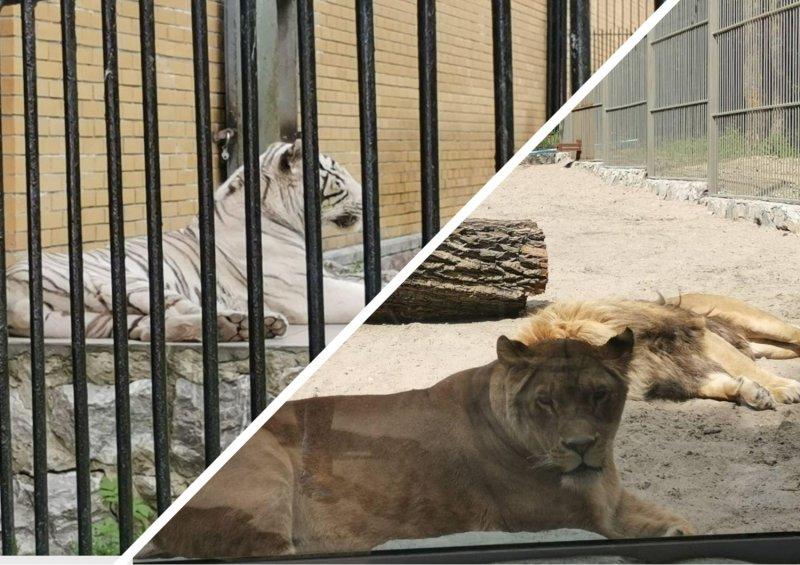 «Люди добрые!»: Россияне и иностранцы спасают от голода зверей в Новосибирском зоопарке
