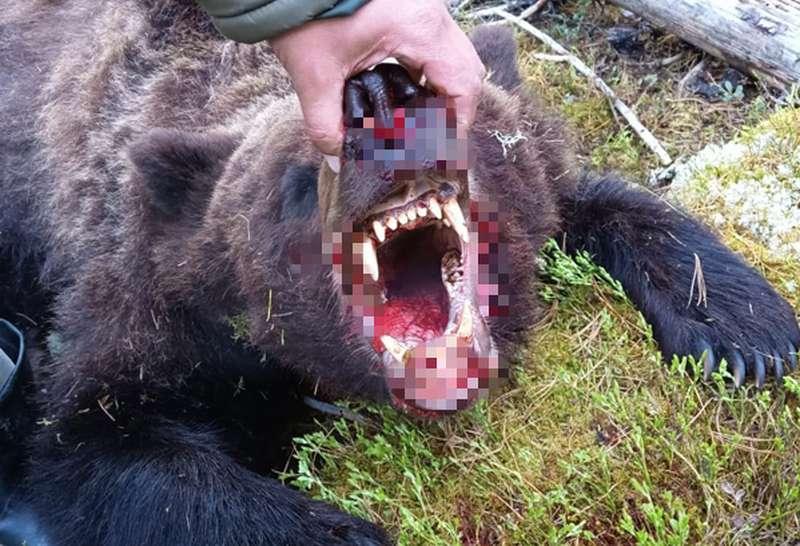 Медведь убил туриста в природном парке Ергаки