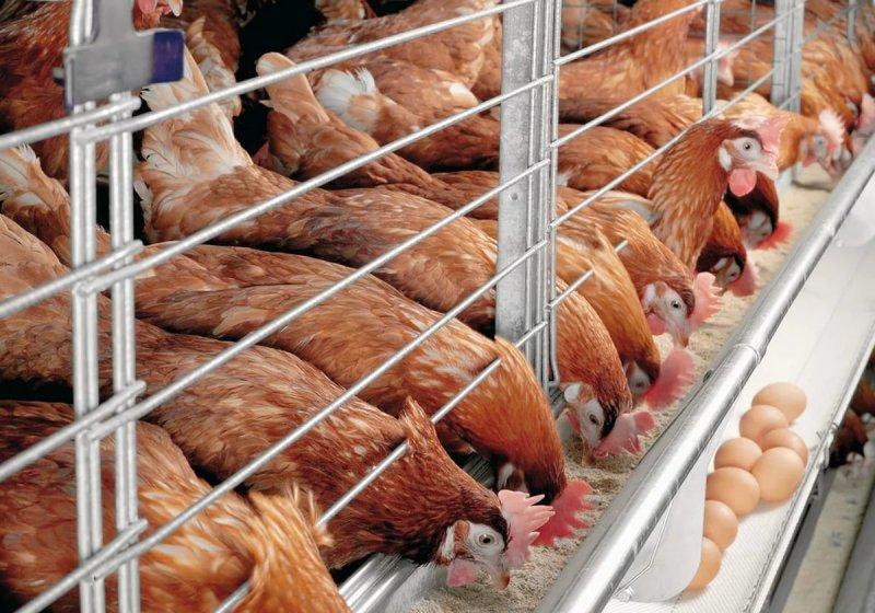 Подросток попал в мясорубку на птицефабрике под Новосибирском