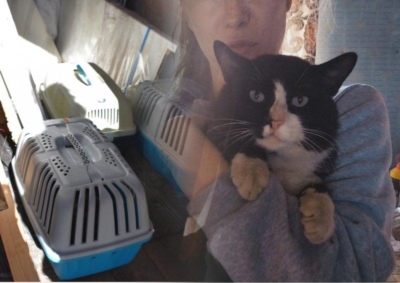 «Такой сладкий!»: Волонтеры спасли с дач кота-мордоворота и назвали в честь восточного лакомства