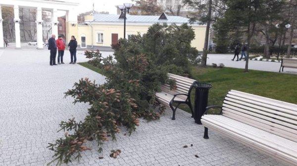 Центральный парк опустошил бюджет на 3,5 миллиона рублей