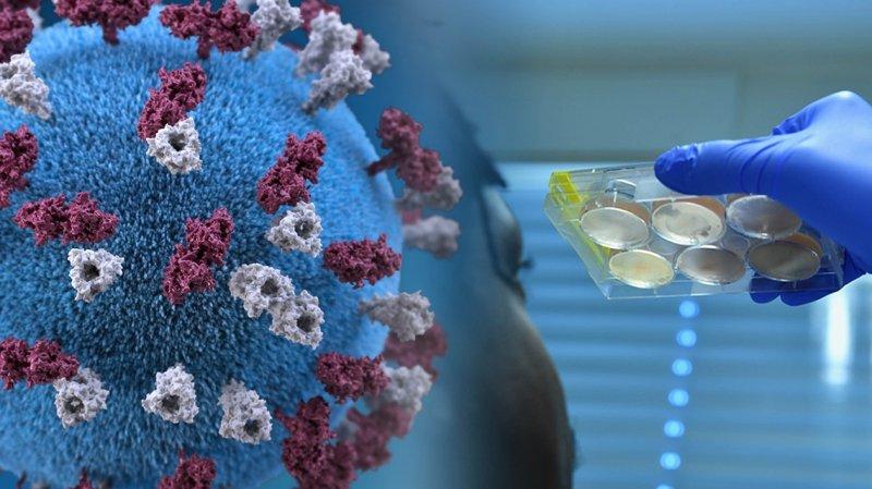 Ученые обнаружили гены, увеличивающих шансы смерти для ковидных пациентов