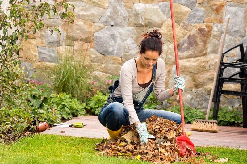 Работы в саду и огороде, которые необходимо сделать в октябре
