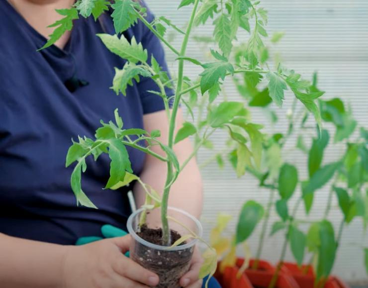 Лунный календарь посадок  в саду и огороде на 2021 год для Сибири