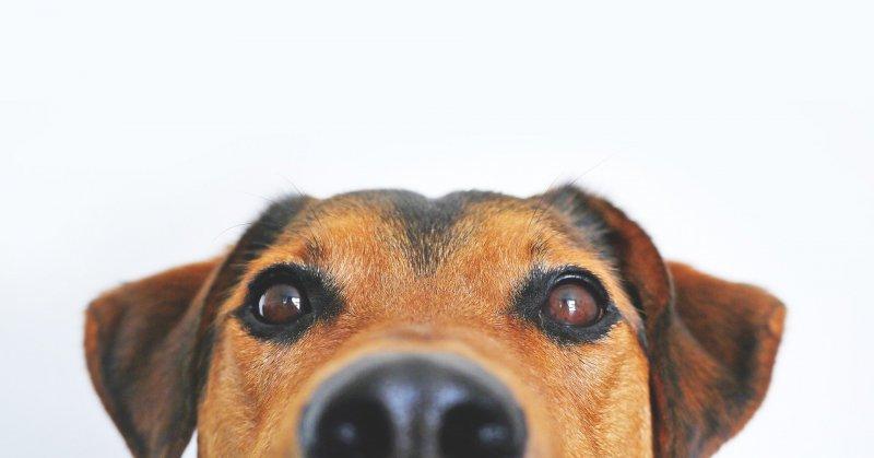 Новосибирцы выстроились в очередь за пивом для собак