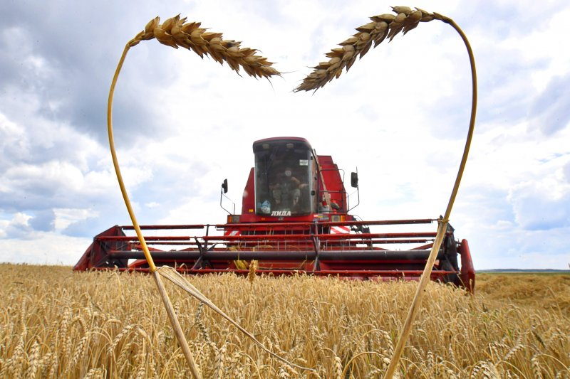 Новосибирская область соберет рекордный урожай зерна и на треть увеличила его экспорт
