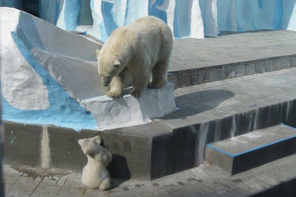 Зоопарк Новосибирска получит 36,4 миллиона рублей от правительства