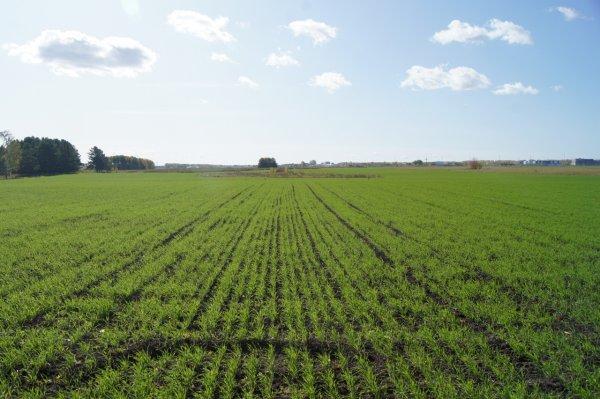 Травников потребовал взять курс на эффективность сельхозпроизводства