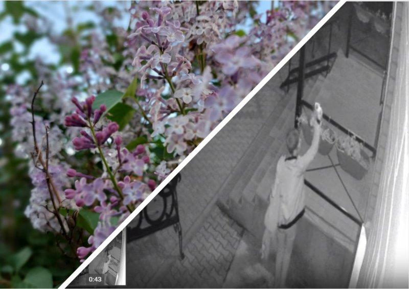 «Цветы последние милей…»: Ночная читательница своровала саженцы у библиотекарей из Болотного