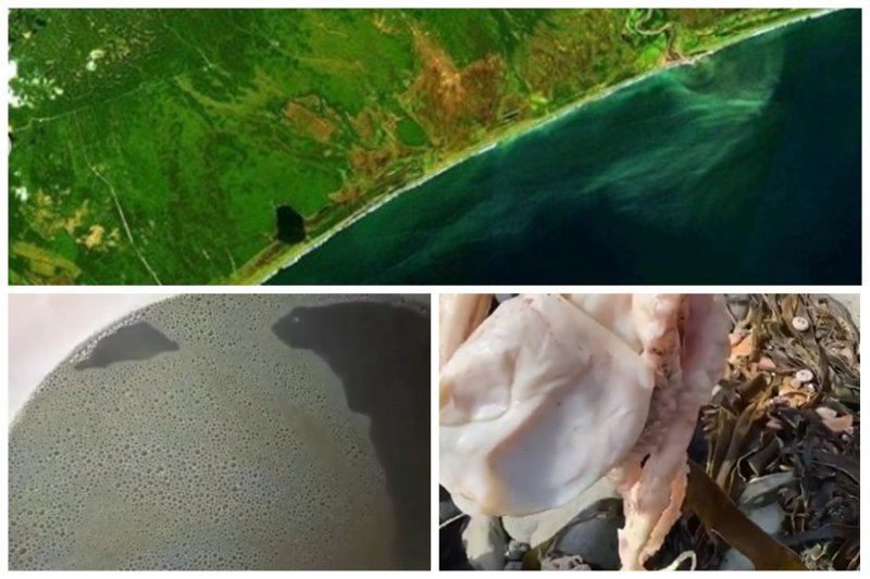 Эксперты: причиной отравления прибрежья Камчатки стали водоросли
