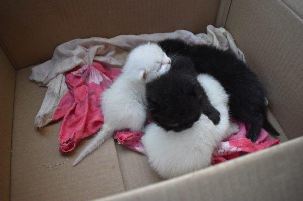 Сибкрай.ru спас котят из квартиры забитой отчимом малышки
