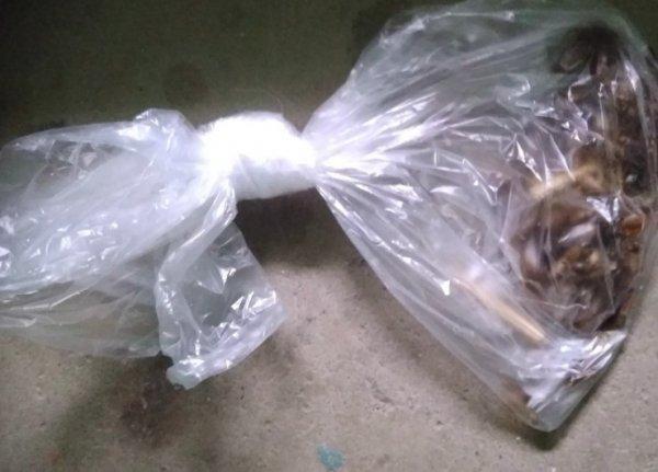 Потеряли или подкинули: пакет с тараканами найден в подъезде