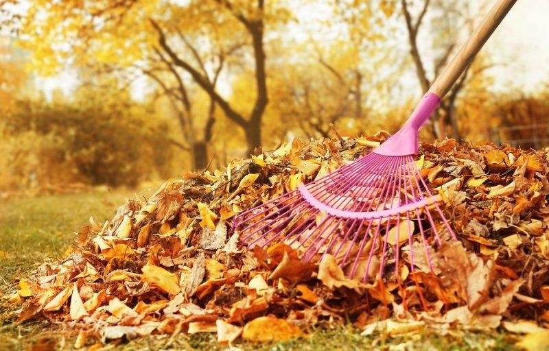 Что делать с опавшей листвой в саду: 10 идей для хорошего урожая