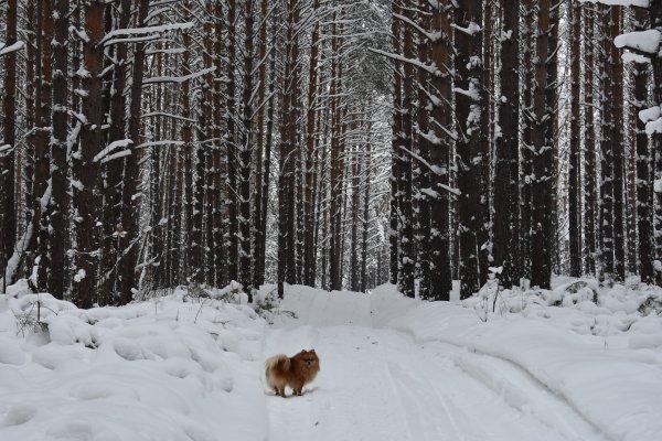 В выходные Новосибирск заледенеет и покроется снегом