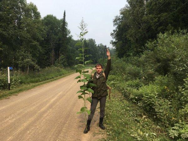 Ученые бьются над загадкой джунглей посреди сибирской тайги