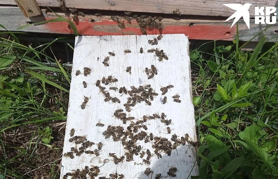 пчелки 2.png