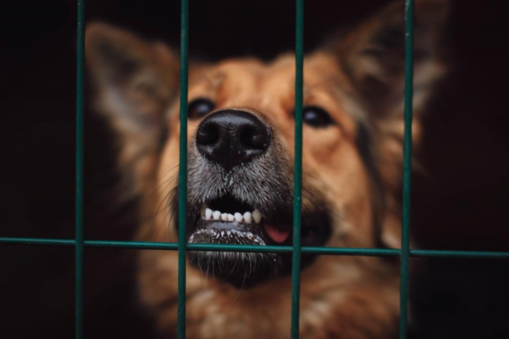 собака4.jpg