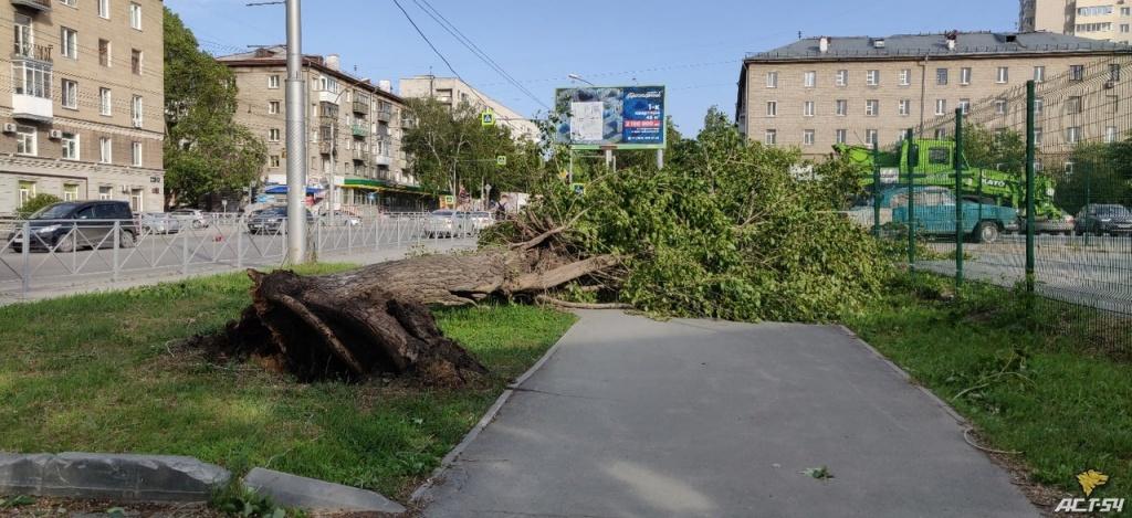 вырванное дерево.jpg
