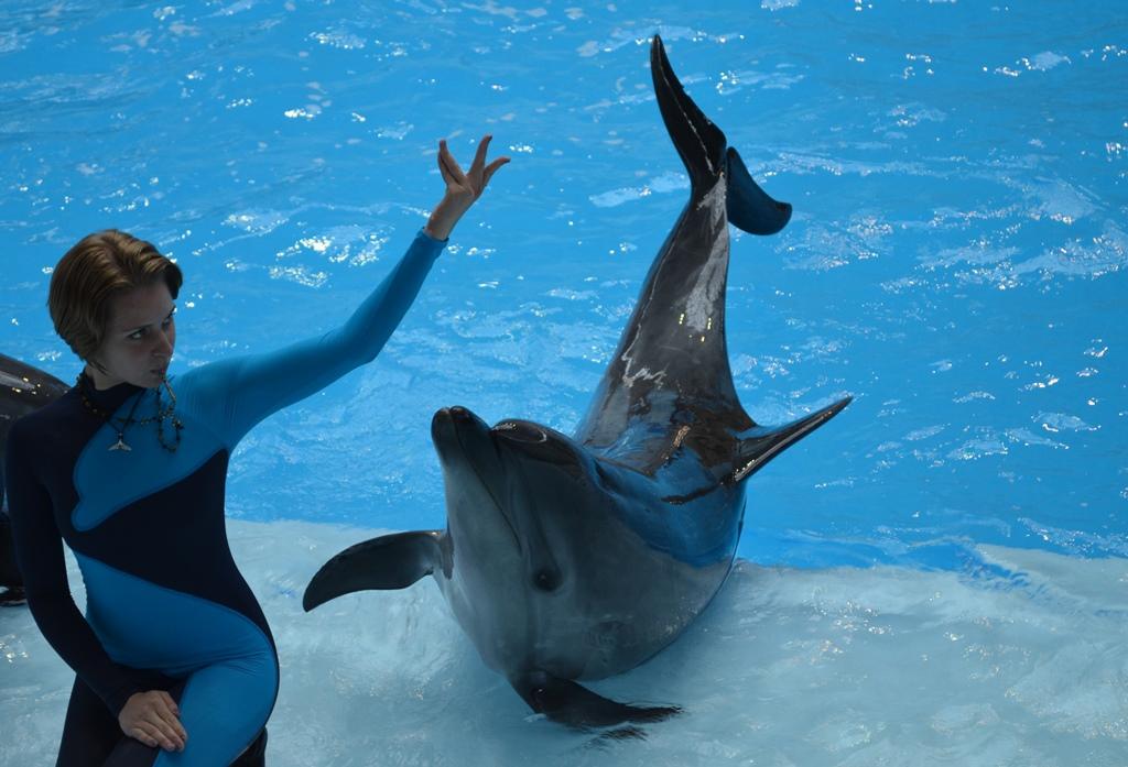 Дельфинарий (28).JPG