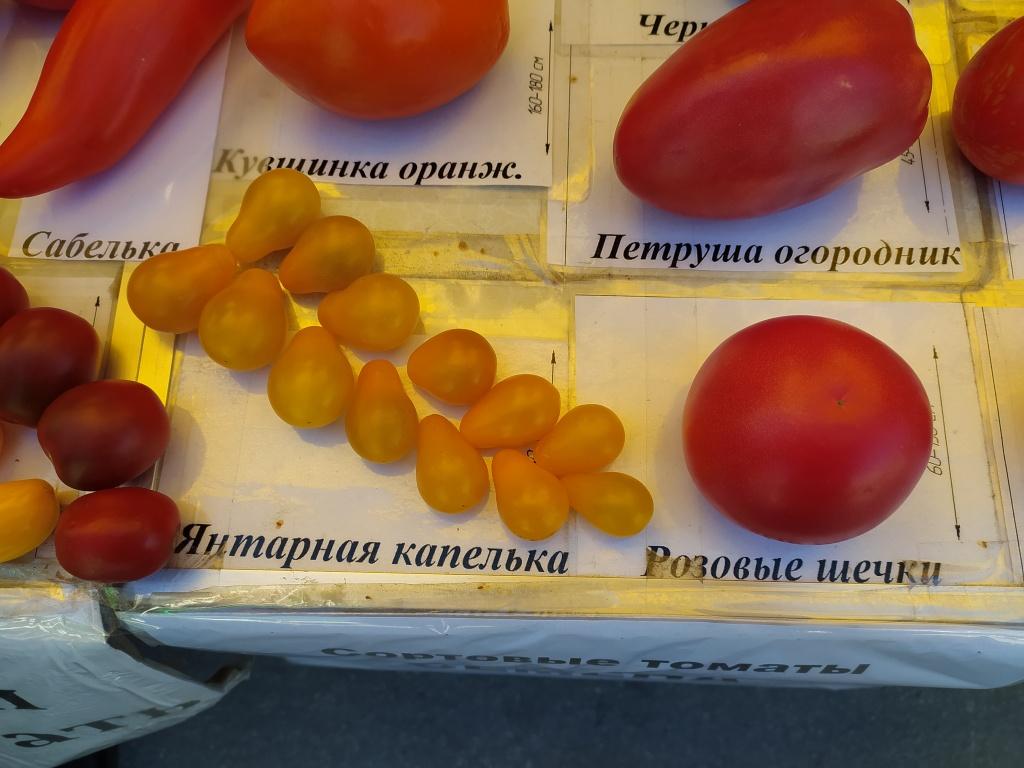 помидоры4.jpg