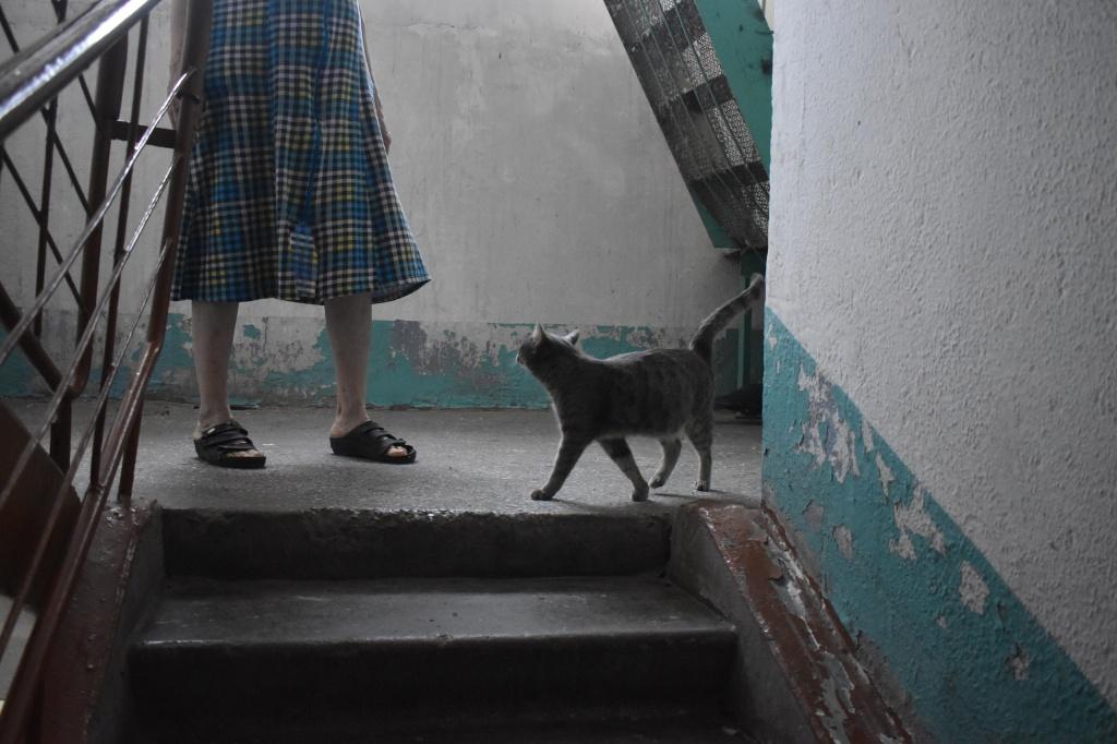 кошка и ноги.jpg
